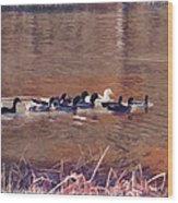 Ducks On Canvas Wood Print