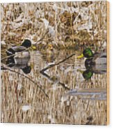 Ducks Reflect On The Days Events Wood Print