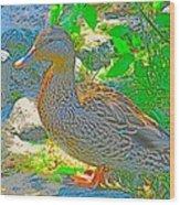 Duckside Wood Print