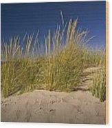 Dune And Beach Grass On Lake Michigan No.969 Wood Print
