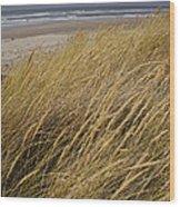 Dune Grass On The Oregon Coast Wood Print