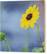 Dune Sunflower Wood Print