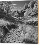 Dunes Path Wood Print