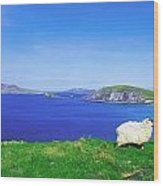 Dunmore Head, Blasket Islands, Dingle Wood Print