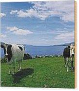 Durrus, Sheeps Head, Co Cork, Ireland Wood Print