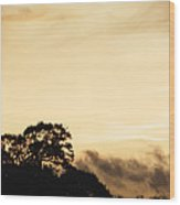 Dusk Forest  Wood Print