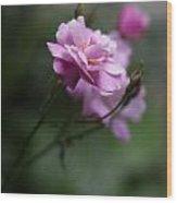 Dusk Light Roses Wood Print