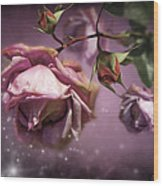 Dusky Pink Roses Wood Print by Svetlana Sewell