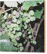 Dusty Grapes Wood Print
