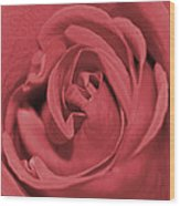 Dusty Rose Wood Print