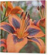 Dutch Lily Wood Print