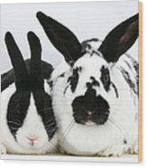 Dutch Rabbits Wood Print