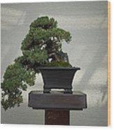 Dwarf Japanese Garden Juniper Wood Print