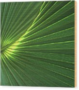 Dwarf Palmetto Leaves Wood Print
