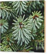 Dwarf Serbian Spruce Wood Print