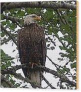 Eagle At Hog Bay Maine Wood Print