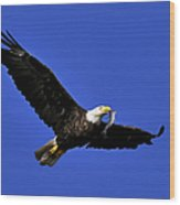 Eagle Fish In Mouth Wood Print