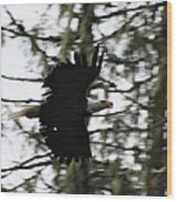 Eagle Fly By Wood Print