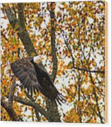 Eagle In Autumn Wood Print