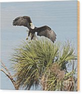 Eagle In The Palm Wood Print