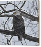 Eagle In The Wild Wood Print