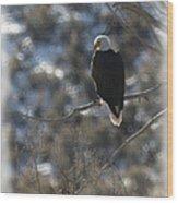 Eagle In Tree 2 Wood Print