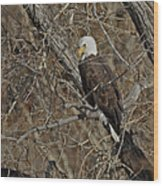 Eagle In Tree 3 Wood Print