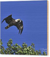 Eagle Over The Tree Top Wood Print