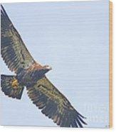 Eaglet 2012 Wood Print