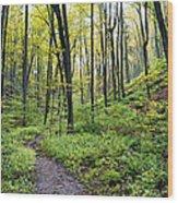 Early Autumn Hike Wood Print