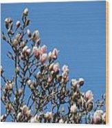 Early Flowering Magnolia Wood Print