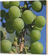 Early Grapes Wood Print