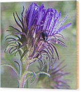 Early Knapweed Wood Print