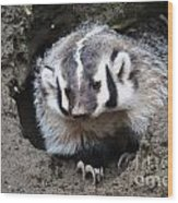 Early Morning Badger Wood Print