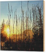 Early Morning In Maine Wood Print