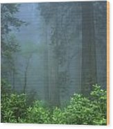 Early Morning In The Forest, Humboldt Wood Print