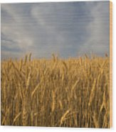 Early Morning Landscape Of Wheat In Palouse Wood Print