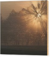 Early Morning Rays Wood Print