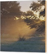 Early Morning Sun Beams Through Branches Of A Tree Wood Print by Heinrich van den Berg
