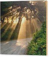 Early Morning Sunlight Wood Print