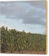 Early Morning Vineyard Wood Print