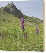 Early Purple Orchids Wood Print