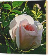 Early Rose Wood Print