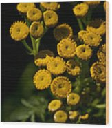 Early Tansy Wood Print