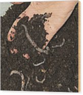 Earthworms In Soil Wood Print by Sheila Terry
