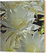 Easter Lily Cactus Bouquet Wood Print