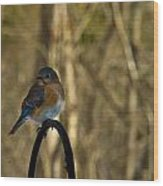 Eastern Bluebird 20 Wood Print