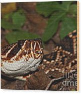 Eastern Diamondback Wood Print by Lynda Dawson-Youngclaus