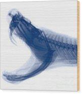 Eastern Diamondback Rattlesnake, X-ray Wood Print