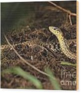 Eastern Garter Snake - Checkered Coloration Wood Print